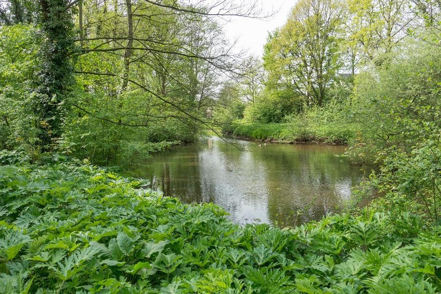 Stadsbegrazing Venlo