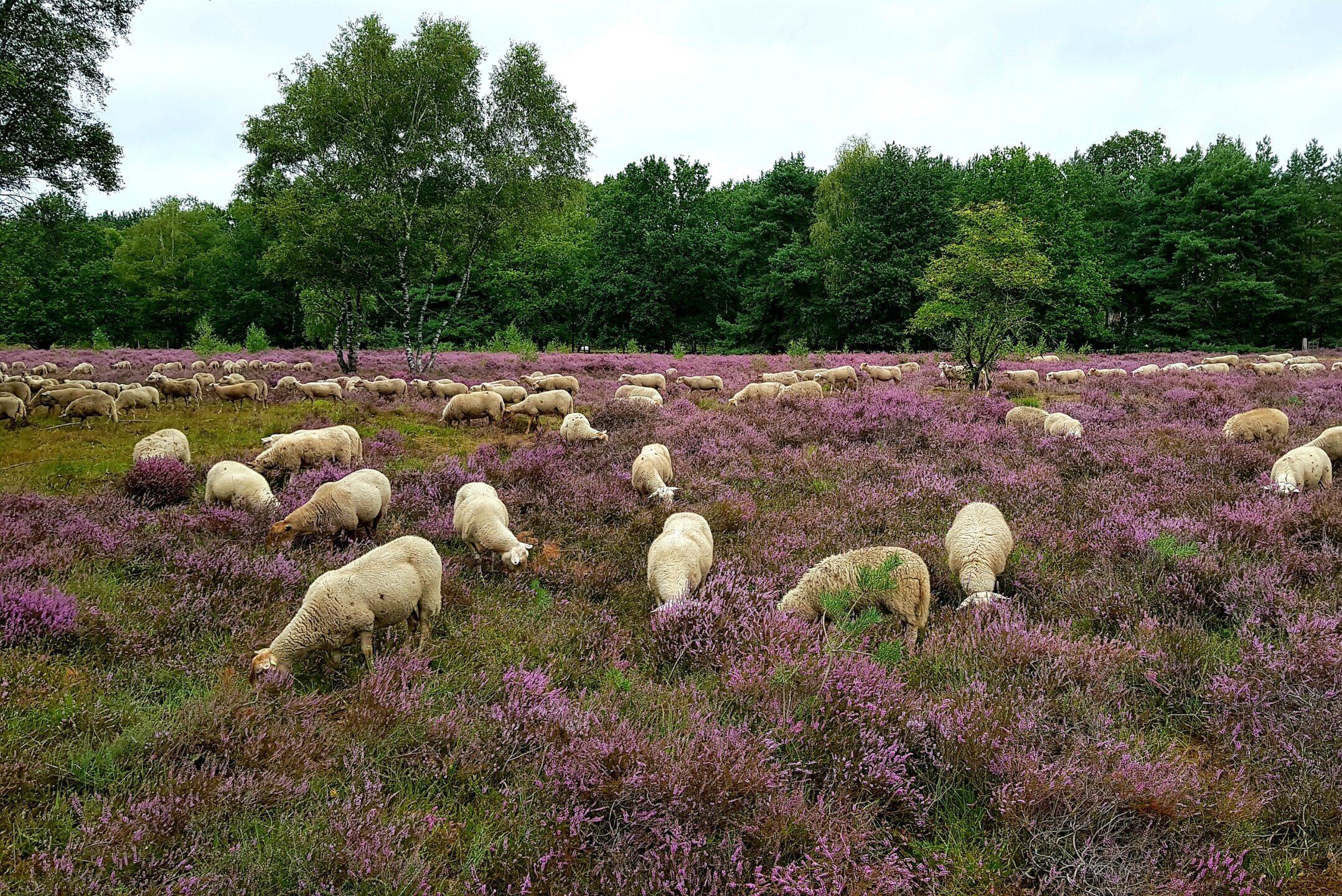 Groote Heide Venlo
