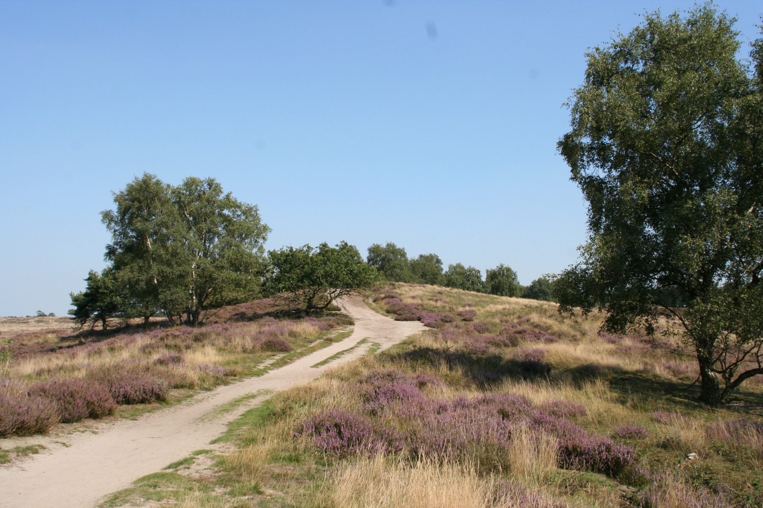 Nationaal Park De Maasduinen - De Hamert