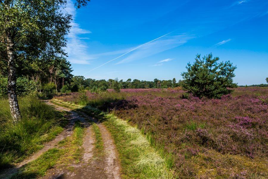 Strabrechtse Heide Noord